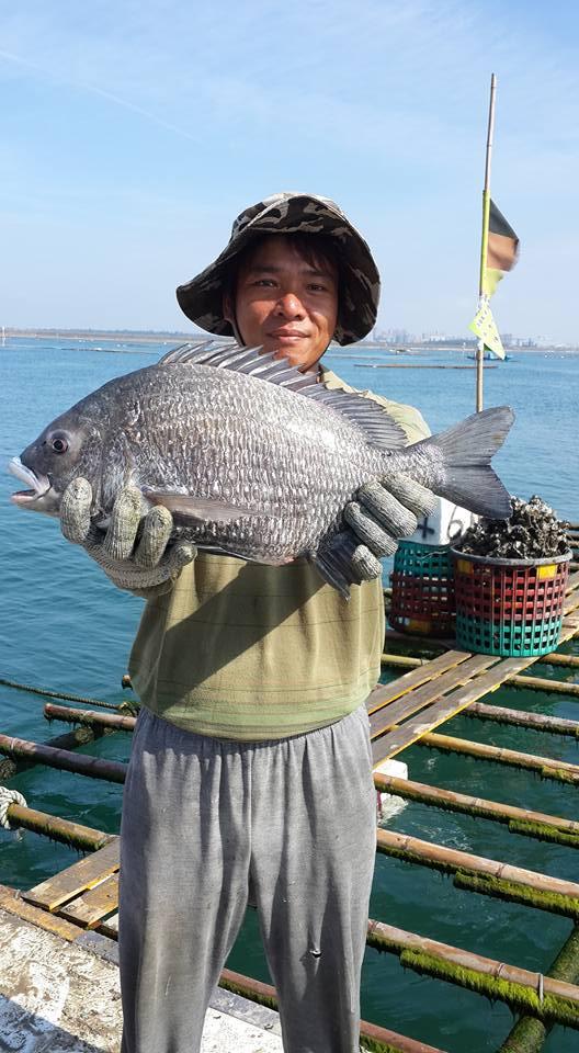 Fisch, Foto(c) 陳正雄